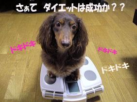 20070109204646.jpg