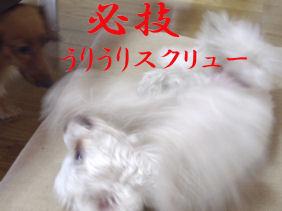 20070131110727.jpg