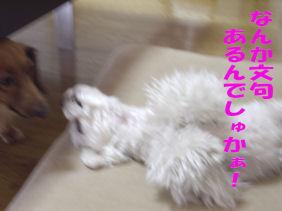 20070131110812.jpg