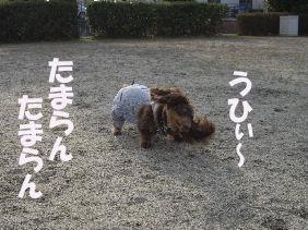 20070206141503.jpg