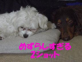 20070210195551.jpg