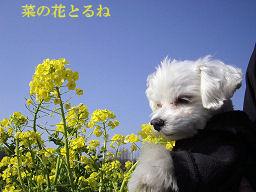 花とレディ