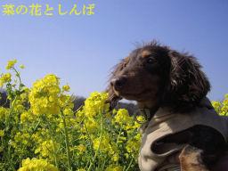 花とおっさん