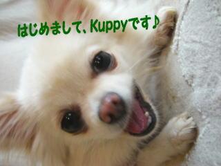 kuppy