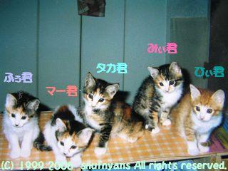 すなふ家の仔猫達