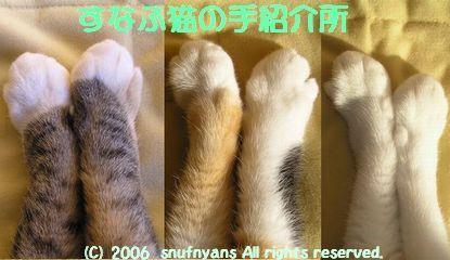 すなふ猫の手紹介所自慢のお手手