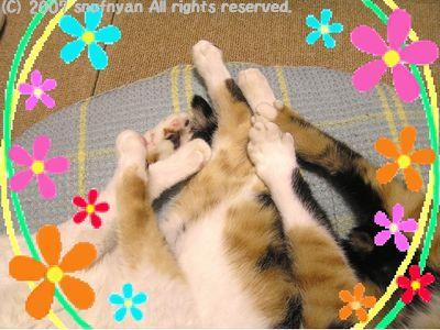 スペシャル猫手束