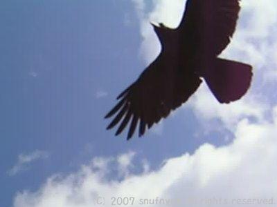 羽ばたく鳥2