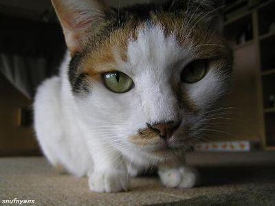 猫デジカメに挑戦状