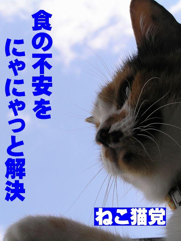 ねこ猫党 青空編