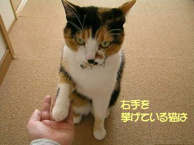 右手をあげている猫は