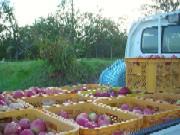 harvest1015.jpg