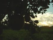 morning1015.jpg