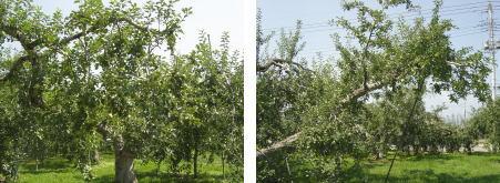 tree8.25.jpg