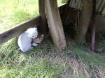 猫『10月3日撮影』