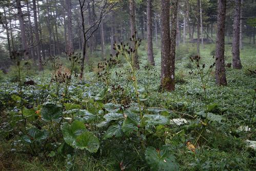 タニグチコブヤハズカミキリの棲む森
