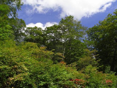 秋晴れブナ林