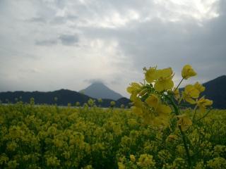 菜の花と開門岳(2007.1.28)