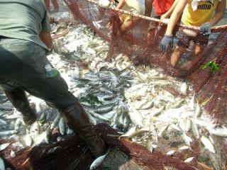 大漁です 2007.8.4