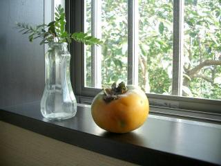 いただいた柿です 2007.9.9