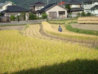 稲刈りの様子 2007.10.17