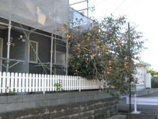 N邸の柿の木 2007.10.27