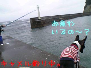 06-05-08_17-31t.jpg