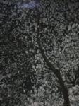 060328_1929~01.jpg