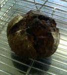 自家製酵母のチョコカンパーニュ