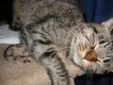 cats-016.jpg