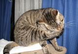 cats-020.jpg