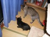 cats-056.jpg