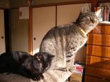 cats-060.jpg