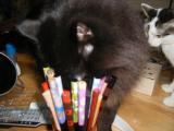 cats-077.jpg