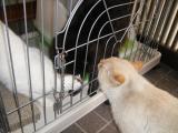 cats-087.jpg