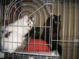 cats-101.jpg