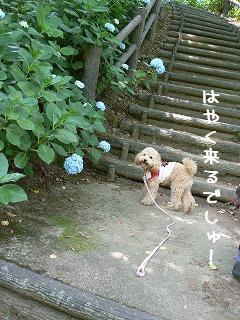 階段がぁー610