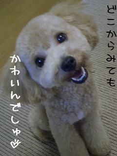 ぷりち727