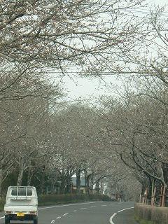 桜並木328