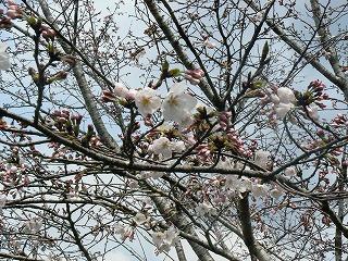 桜328-2