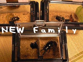 新、家族。919