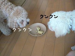 ニオイ嗅ぐ101
