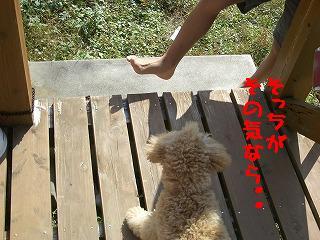 足!邪魔!!だって!!!