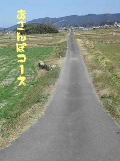 お散歩コース①
