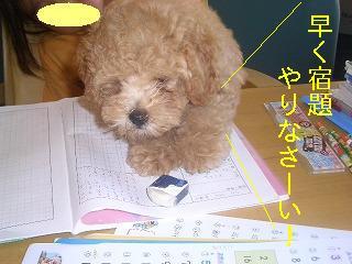 勉強しなさーい