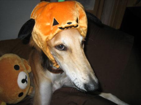 かぼちゃ王子