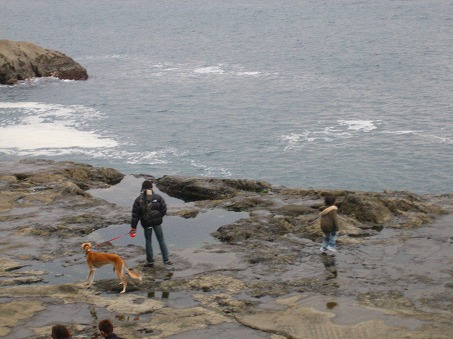 海辺お散歩