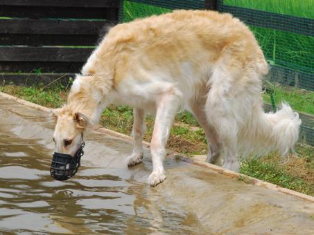 水も飲める