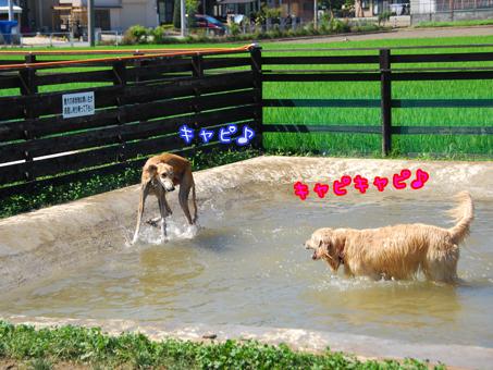 カレンちゃんと水遊び