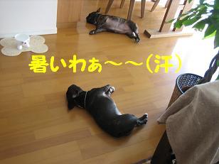 暑いわ・・・1